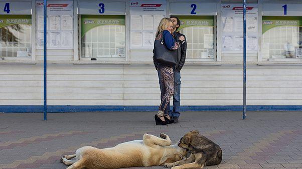 A Sotchi on extermine les chiens errants