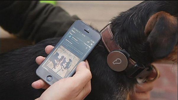 Hightech-Halsband für Hundehalter