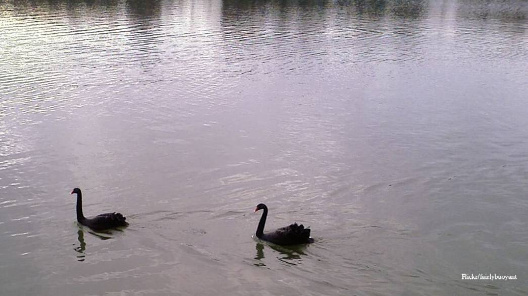 The Black Swans of 2014