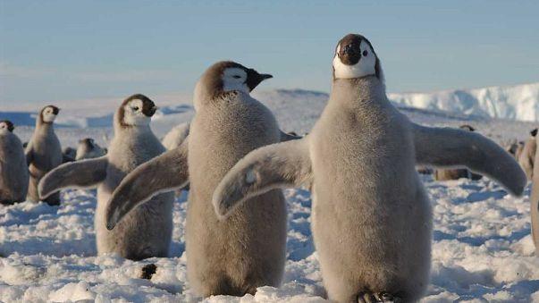 Суровая британская зима вогнала в депрессию даже пингвинов