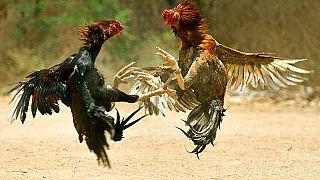 Angry Birds: птицы, да не те