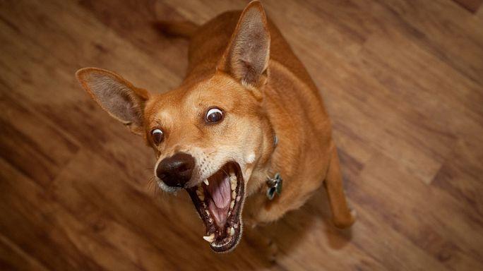Espagne : un supporteur en colère jette un chien en direction de l'arbitre