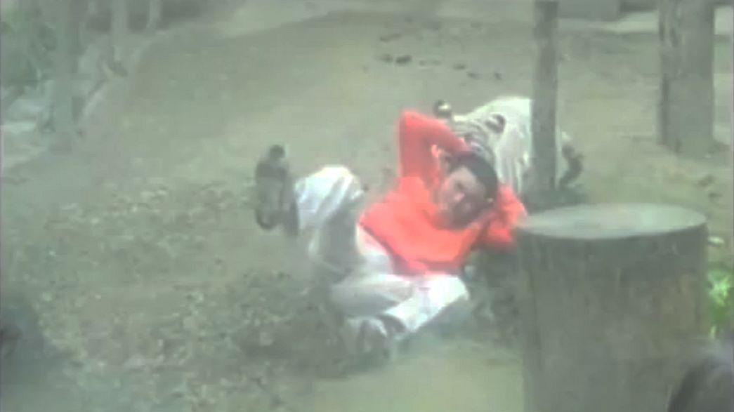 Chine : un  jeune suicidaire se jette dans un enclos de tigres