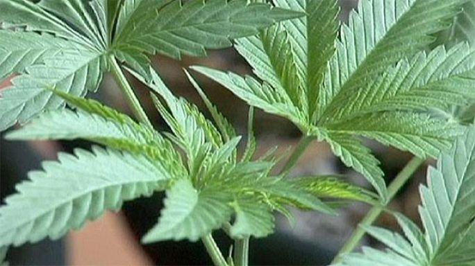France: Police test positive for cannabis amid stockpile at station near Lille