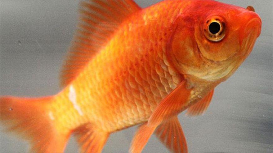 UK: 'Horrendous cruelty' of woman who 'microwaved' kitten for eating goldfish