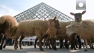 Paris : des moutons s'invitent au Louvre