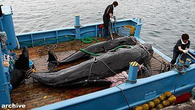 CIJ ordena a Japón que revoque los permisos de caza de ballenas en Antártida