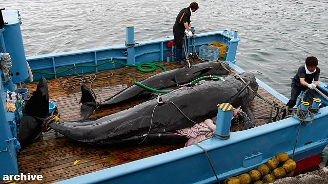 International Court of Justice judges revoke Japan's whaling permit