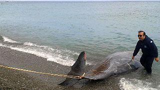 Τα δελφίνια, η φάλαινα και η κρητική λεβεντιά