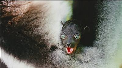 Freeman voices concerns about endangered lemurs in documentary