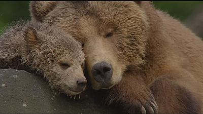 'Bears': bear cub's life in Alaska