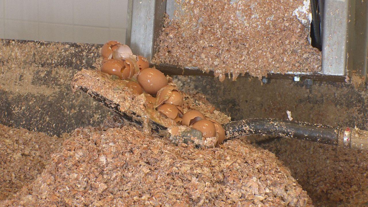 بازیافت پوسته ظریف تخم مرغ برای تولید محصولات مفید
