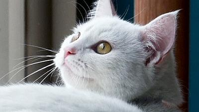 America's first cat café opens in NYC – nocomment