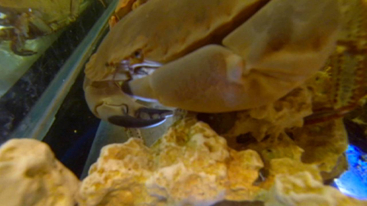 Do you know: can crab shells be toxic?