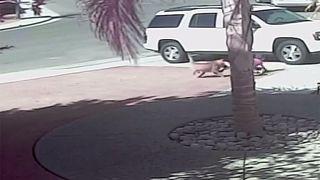 YouTube-Hit: Katze rettet Kleinkind