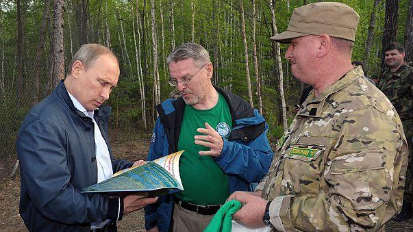 Putyin árva tigriseket engedett szabadon