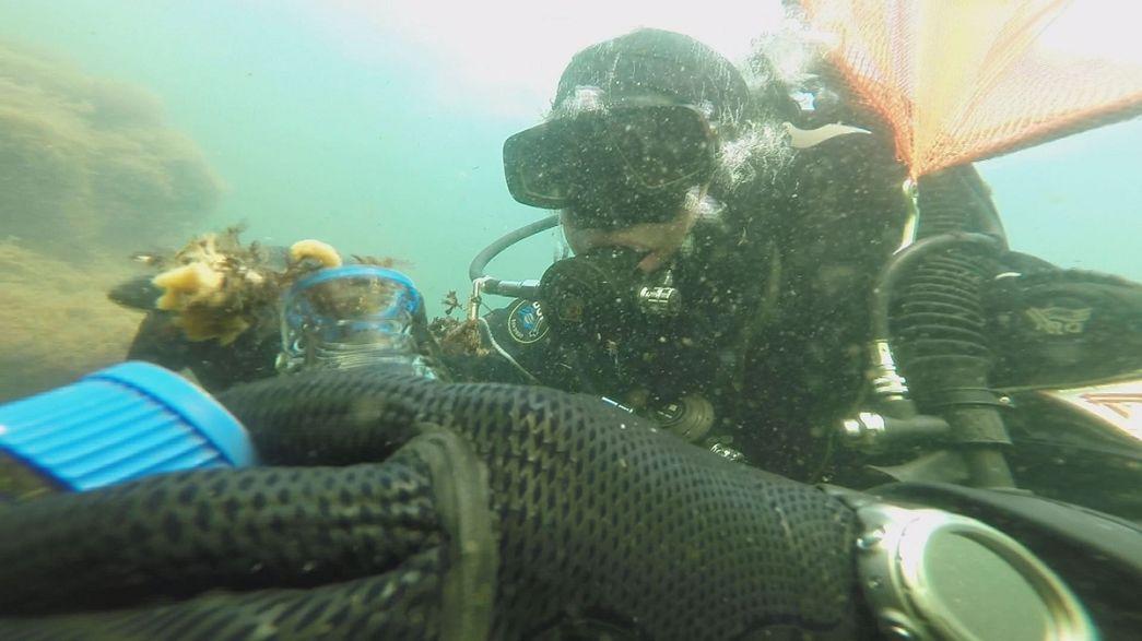 Kanserle savaşan deniz mikro organizmaları