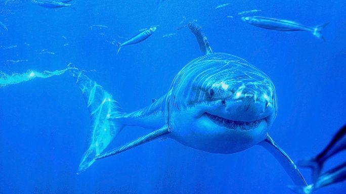 Cápariasztó okosbóját fejlesztettek ausztrál kutatók