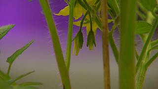 هل يمكن إستخدام النباتات لرصد مستويات التلوث؟