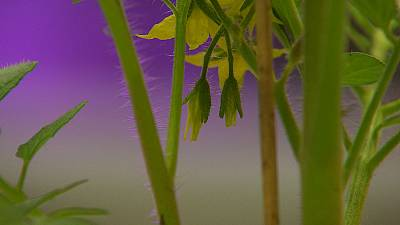 Les plantes parlent, écoutons-les !