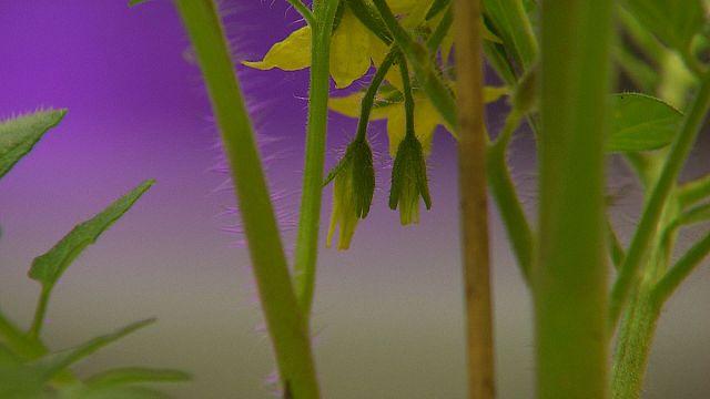 El mensaje de las plantas