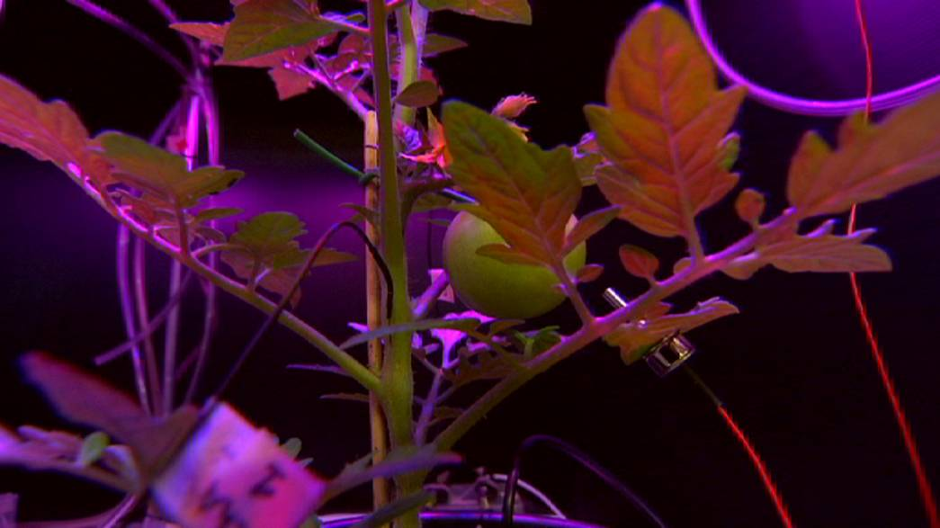 Do you know: can plants speak?