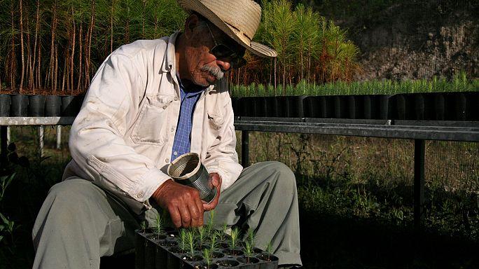 Sägen und Säen: Walderhalt auf mexikanisch