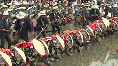Japan celebrates rice planting tradition – nocomment