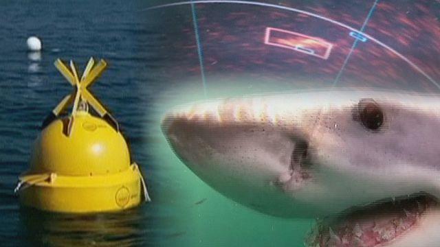 """""""عوامة ذكية"""" لتحديد مكان سمك القرش"""