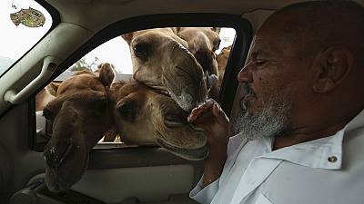 Man not getting the hump with camels despite MERS outbreak