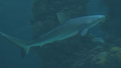 Monaco museum to clean up sharks' bad image