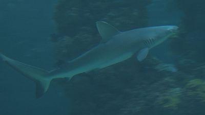 Uma carícia para acabar com o medo dos tubarões