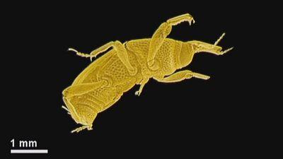 Les insectes hautement radiographiés