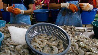 «Креветочное» рабство в Таиланде