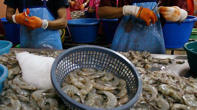 Rabszolgák dolgoznak a nyugati piacra szánt garnélák előállításán
