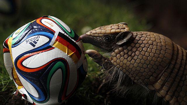"""Un mois au Brésil : la Coupe pour ceux qui """"sans foot"""""""