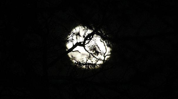 """""""Luna de fresa"""" en viernes 13 606x340_270594"""