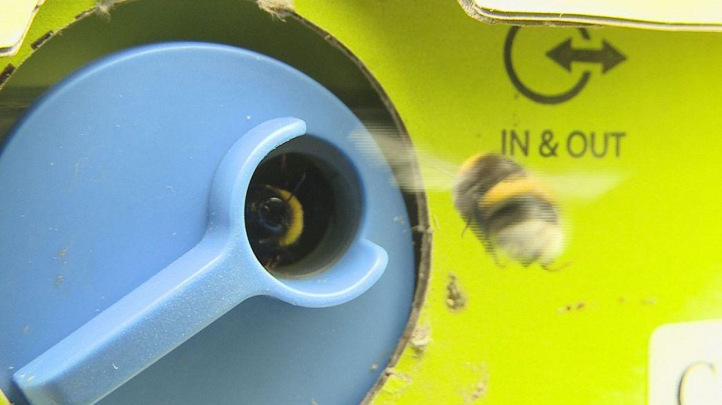 SOS Emergenza per api ed insetti impollinatori