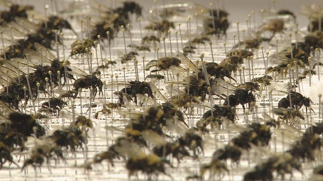 Do you know: can we survive without bees?