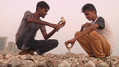 Tons of shellfish wash ashore on Arabian Sea coast – nocomment