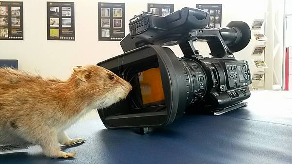 Spray the rats away - better ways to rid us of rodents