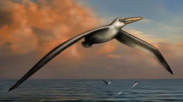 Ανακαλύφθηκε το μεγαλύτερο πουλί που έχει πετάξει ποτέ στη Γη!