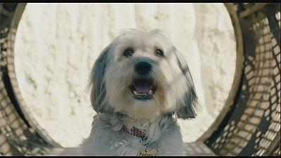 Pudsey the dog does his own stunts in family film 'Pudsey: The Movie'