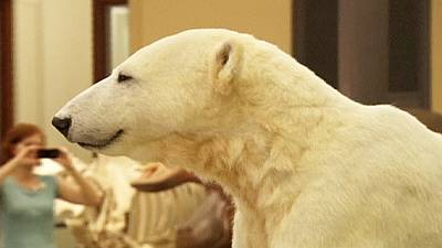 Everlasting Knut: famous bear moves to Natural History Museum – nocomment