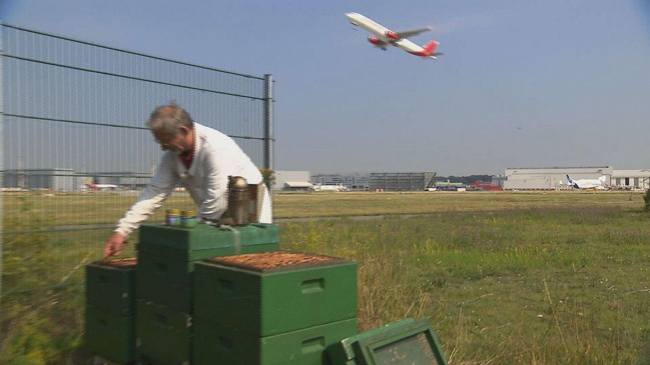 مهمة دقيقة للنحل في مطار هامبورغ