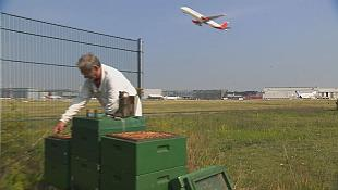 Buzz and roar airport bees used to monitor aircraft pollution
