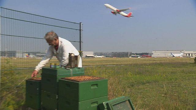 Umweltdetektiv Biene ermittelt über dem Rollfeld