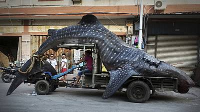 A fisherman transports a dead whale shark