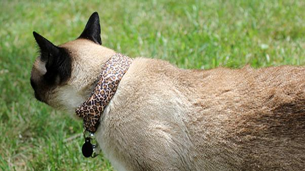 Cirmi, a Wifi vadász