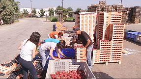 Los agricultores griegos víctimas del embargo ruso a la UE y EEUU